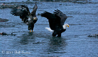 Eagles Crossing River in Haines Ak